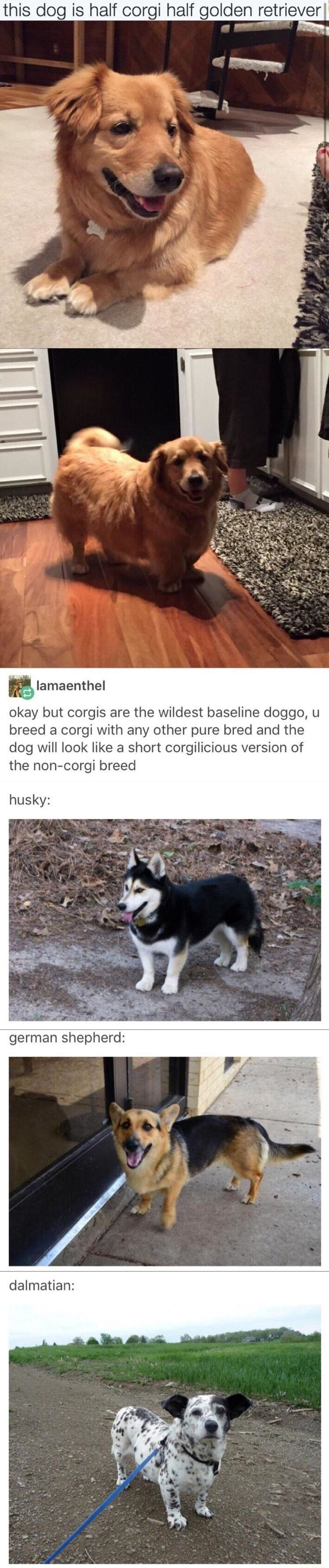 21 Corgi Posts That You Should Send To Your Best Friend Immediately