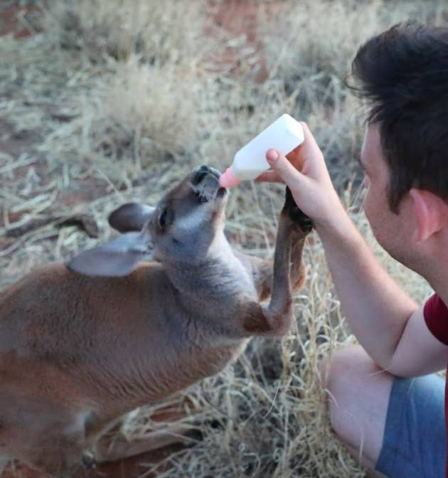 No visit to Alice Springs is complete without visiting the kangaroos and Kangaroo Dundee at the Kangaroo Sanctuary. Although they only run one tour a day (for the benefit of the roos), it's well worth the stop if you're in town.