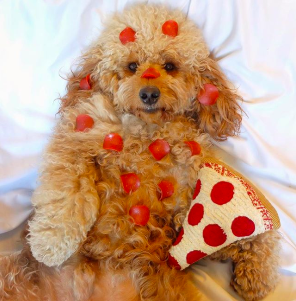 Maybe your pup has a serious pizza obsession.