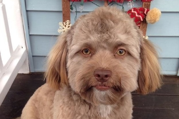 This Dog Has A Human Face