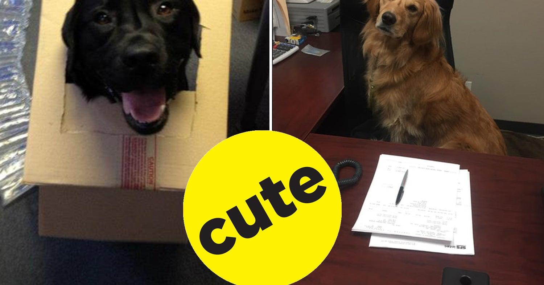 17 Office Dogs Who Definitely Deserve A Raise