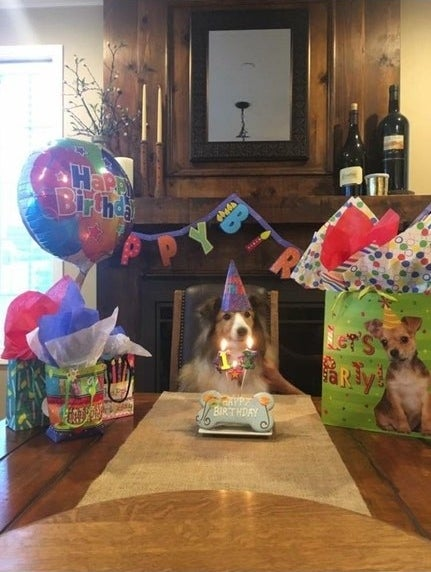 BREAKING NEWS: It's this dog's birthday!!!