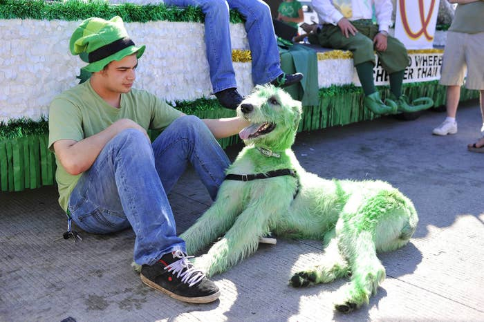 Zach Paul sits with his Irish wolfhound in Chicago as he waits for the start of the St. Patrick's Day Parade in 2012.
