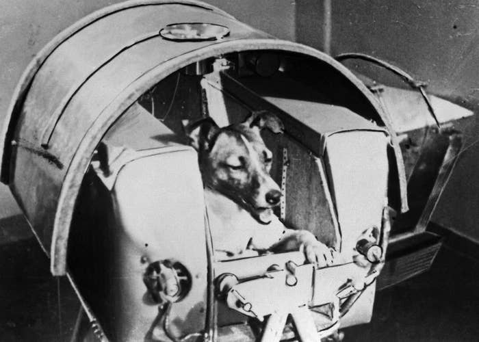 Laika, a Russian cosmonaut dog, sits in a training module in1957. Sadly, Laika did not survive the mission.