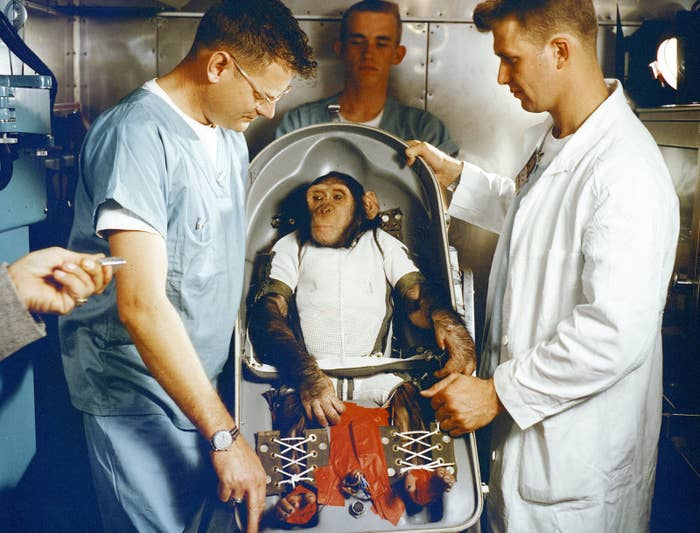 On Jan. 31, 1961, a Mercury-Redstone launch from Cape Canaveral carried a chimpanzee named Ham (seated here in the biopack couch for the MR-2 suborbital test flight) over 640 kilometers down range in an arching trajectory that reached a peak of 254 kilometers above the Earth. The mission was successful and Ham performed his lever-pulling task well in response to the flashing light.