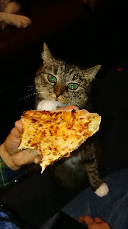 And this cat who actually may be possessed by pizza.