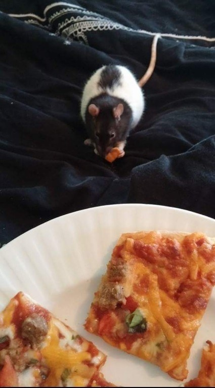 And this pepperoni-sized mouse.