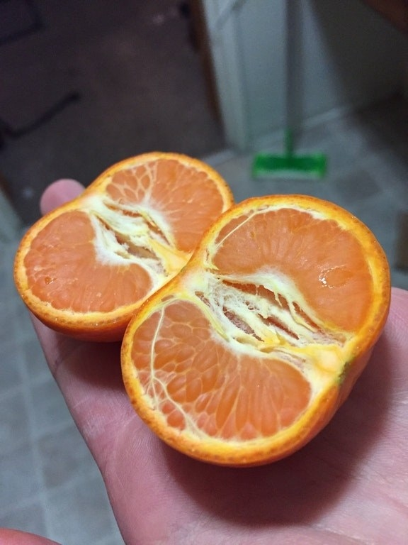 This person managed to cut an orange in half, without breaking the skin on any slices.