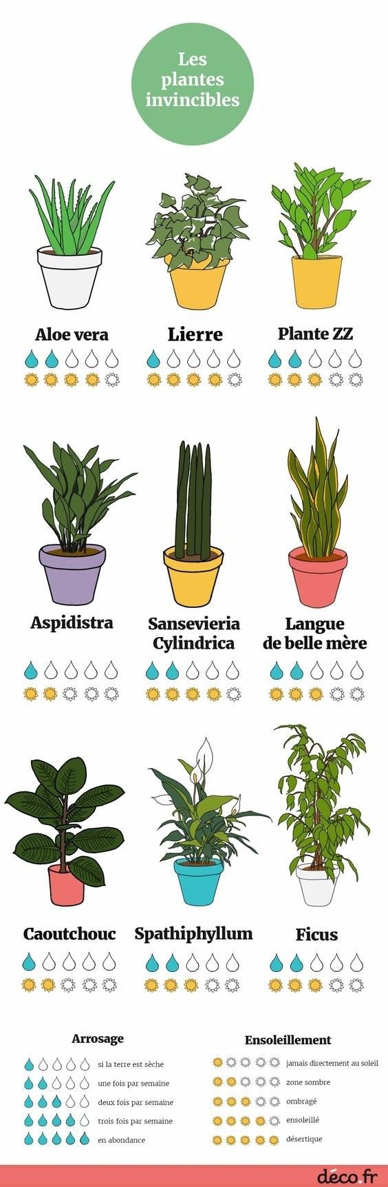 8 plantes à privilégier si vous n'avez pas la main verte