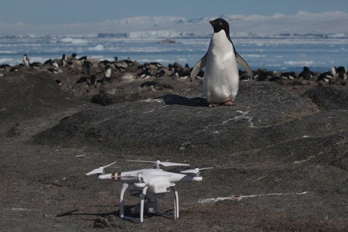 An Adélie penguin and one of the drones on Brash Island, Danger Islands, Antarctica.