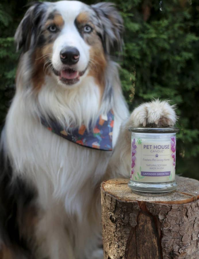 dog poses with pet house candle