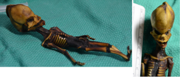 Now a new analysis of the entire genome provides much more information about the skeleton.