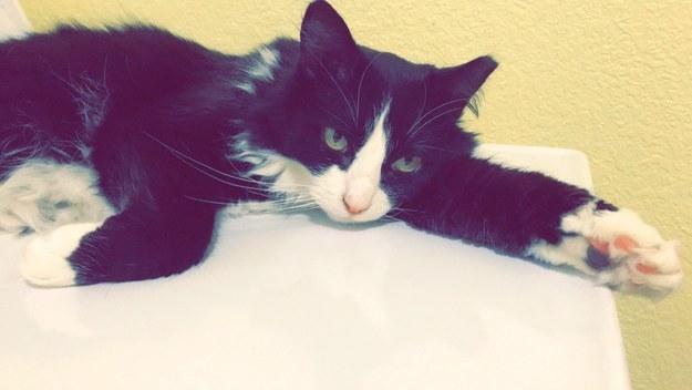 Kitty-Purry