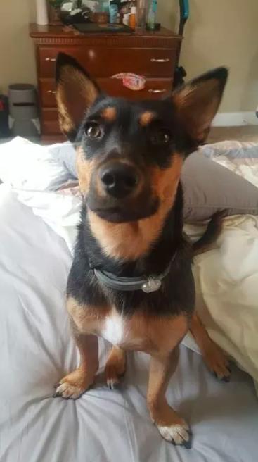 Binyah Binyah Pollydog