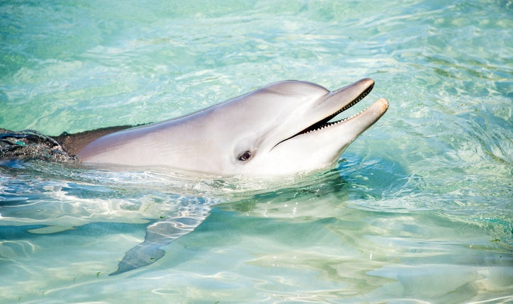The bottlenose dolphin can make half of its brain go to sleep while the other half remains awake and alert.