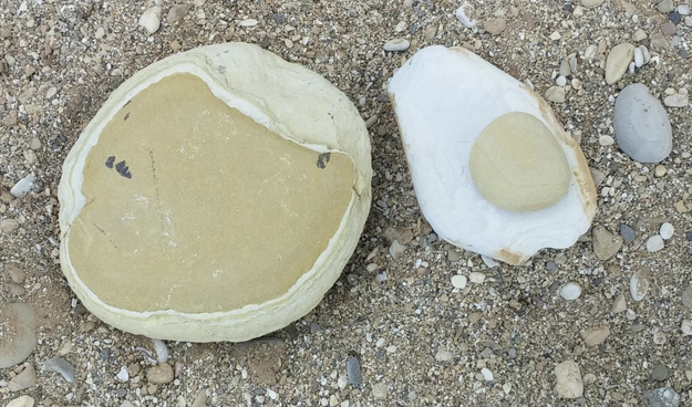 These rocks that look like a pancake and egg...