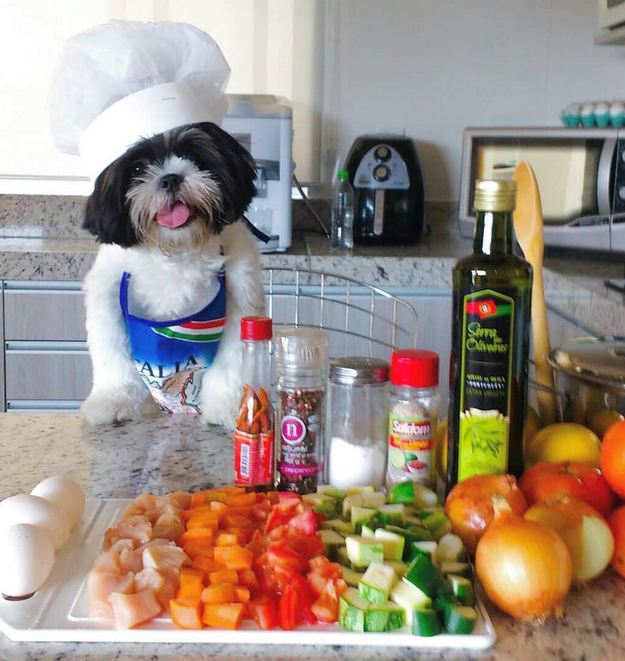 While this furry lil' chef has not: