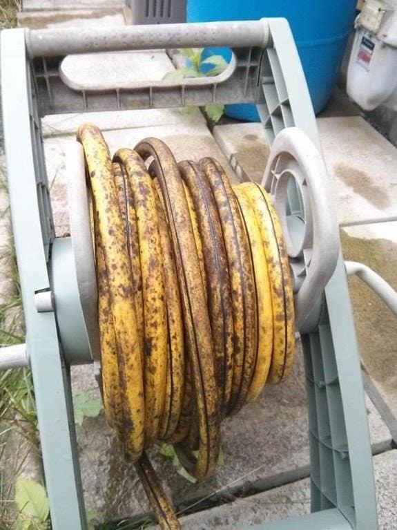 Por qué me la comería: como decía mi abuelito: soy un puto idiota.A qué creo que sabría: a plátano largo.