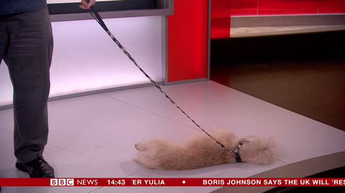 (This was a serious interview about Crufts btw, but the dogs were delightful).