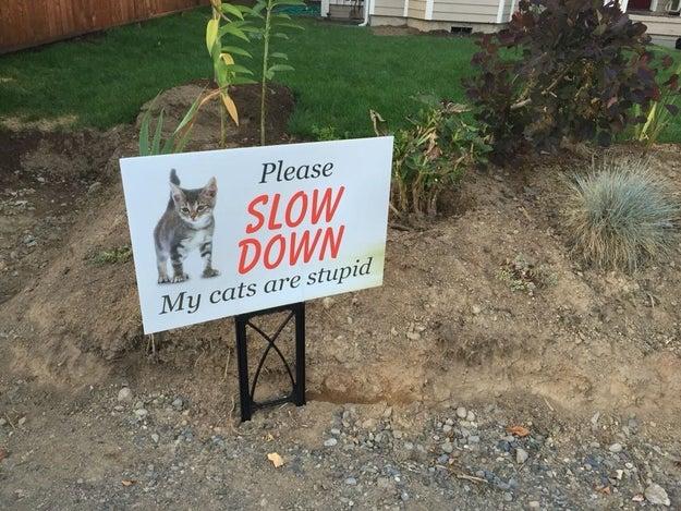 Meow:
