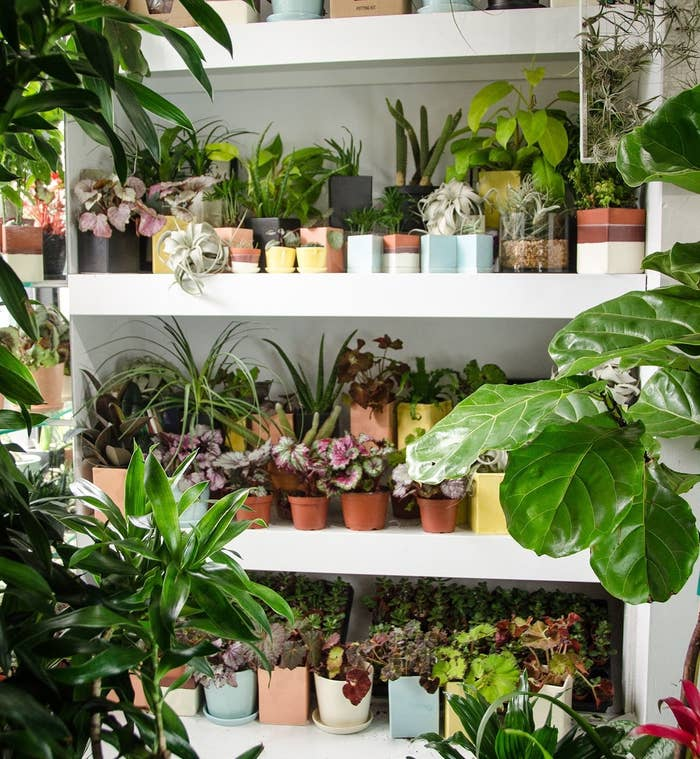 2 The Sill A Millennial Succulent Emporium With Booming Instagram Presence