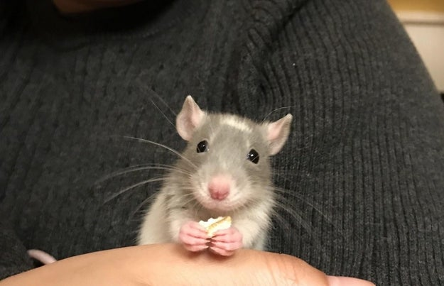 They eat with tiny pink feet and it's certifiably adorable: