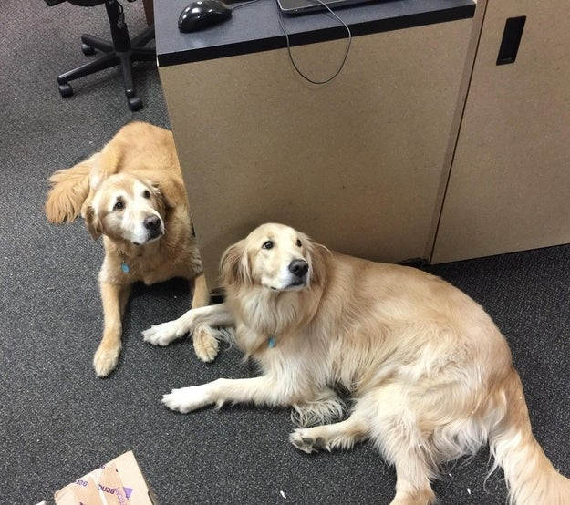 And lastly, these golden gurlz doin' an office gossip who stop boofin' as soon as you walk by.