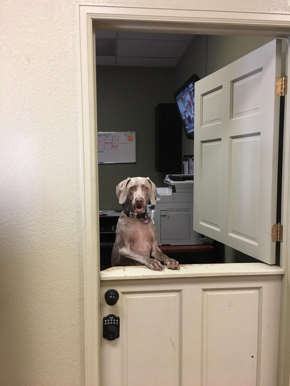 This eager boye who loves a good customer service!