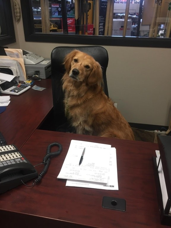 This CFO (Chief Floof Officer) needs to see you in her office when you have a minute.