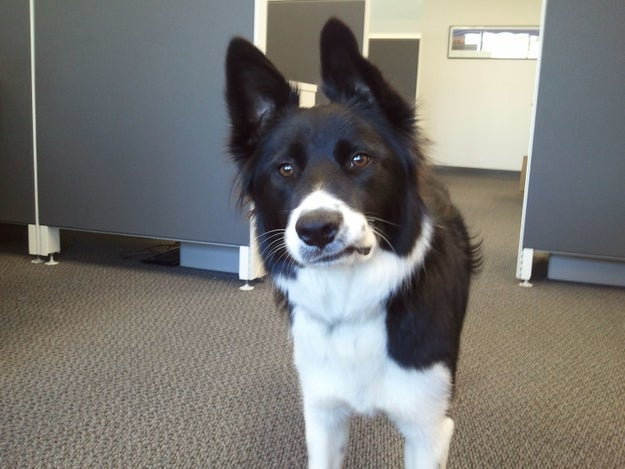 """This boye who does a frustrate and types, """"as per my last email..."""""""