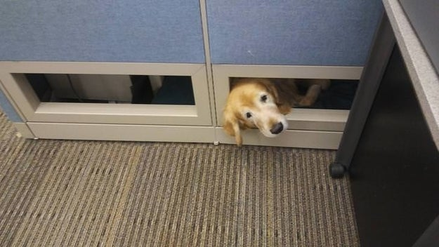 """This guide boye who says, """"Henlo, my coworker!"""""""