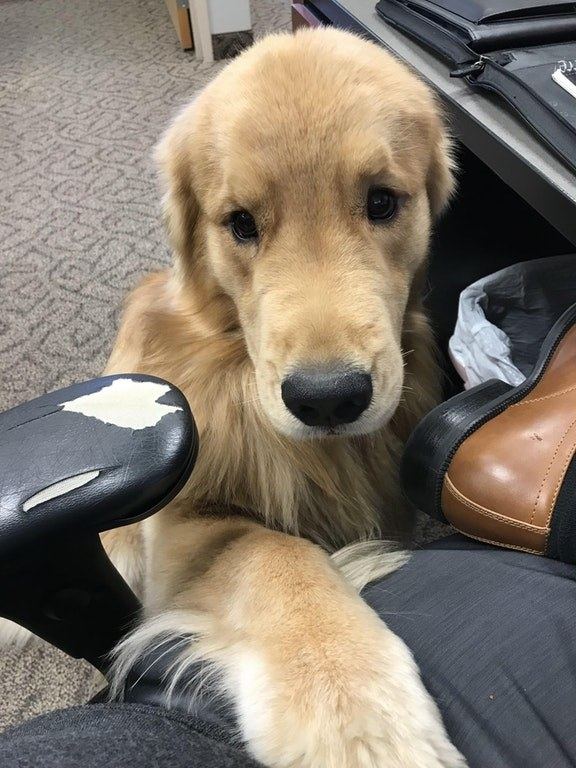 This puppy-eyed snoof who just wants to make sure you're meeting your deadline.