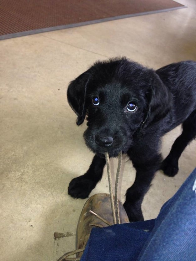 This young, spry intern who won't stop chewing on your shoe laces.