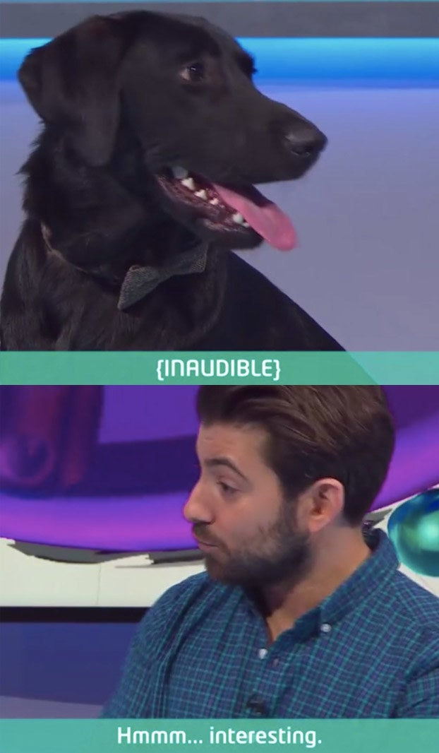 I now want a caption saying [INAUDIBLE] whenever a dog is on screen.