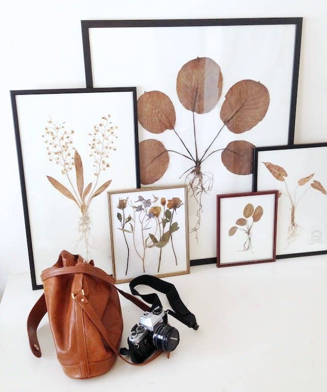 Press flowers or leaves, glue them on paper, then put them on display for everyone to admire. Framed pressed ...