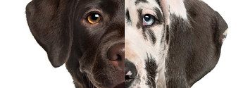Everyone Is A Mix Of Two Dog Breeds – Here's Yours