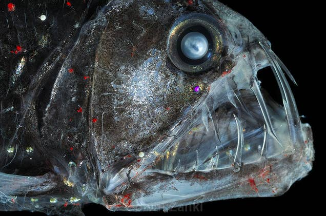 21 Creatures From The Deep Sea That Will Absolutely Give You