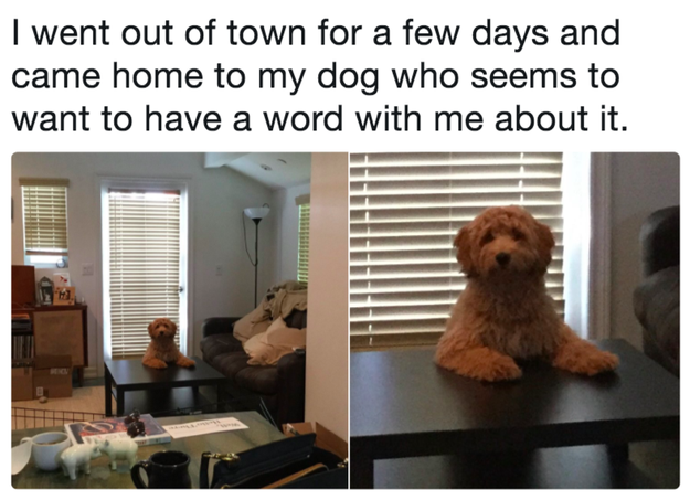 This dog who was not too happy about his owner going on vacation.