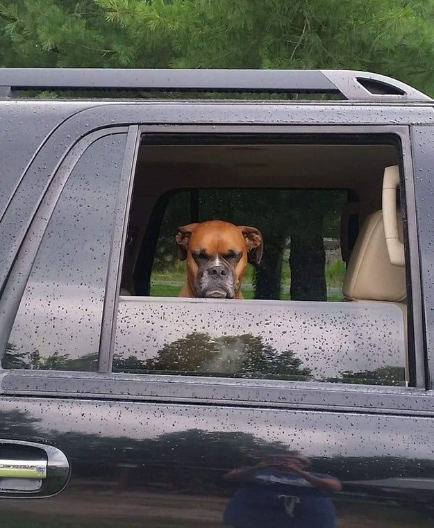 This dog who was NOT too pleased about having to leave the park.