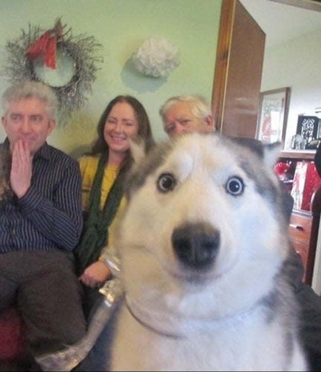 This dog who crashed the family's self-timer photo.