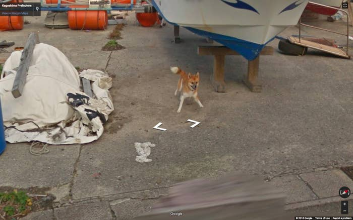 This Dog Chasing A Google Street View Car Is So Cute I Could Die