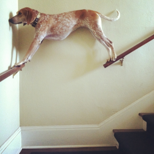 This dog who somehow ended up in this unusual predicament.
