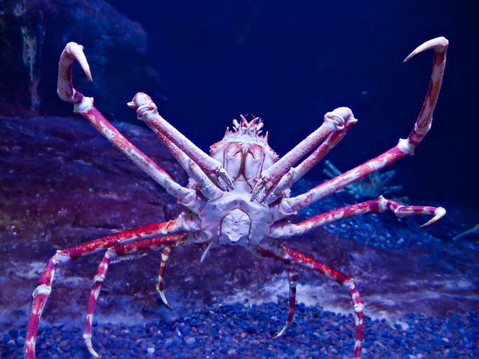 21 Creatures From The Deep Sea That Will Absolutely Give You Nightmares