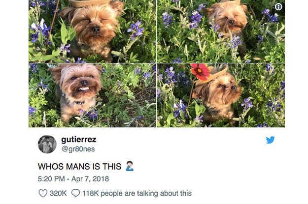 23 Tweets About Dogs That'll Make You Say