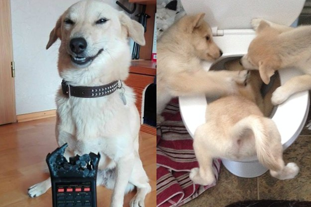 19 Dogs Who Pushed Their Owners To Their Absolute Limits