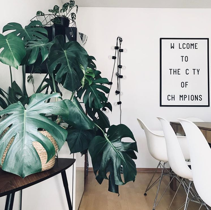 A Guide To All The Trendy Houseplants You're Seeing All Over Instagram