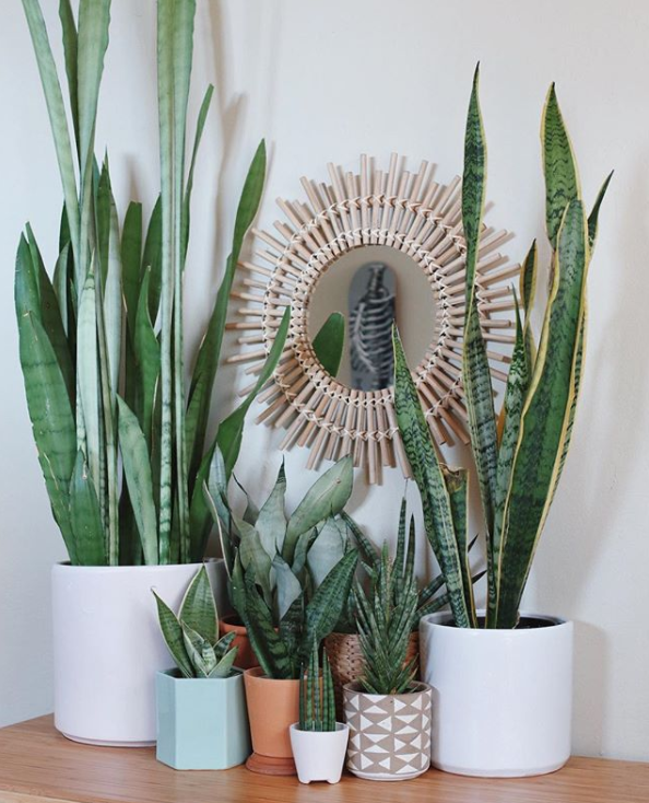 A Guide To All The Trendy Houseplants You're Seeing All