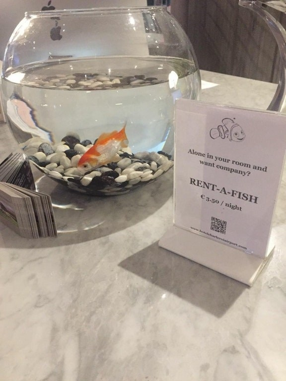 This hotel lets you rent a pet fish if you're lonely.