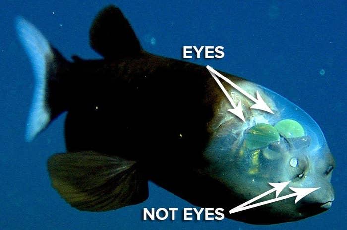 Weird Fish That Live Deep In The Ocean 2