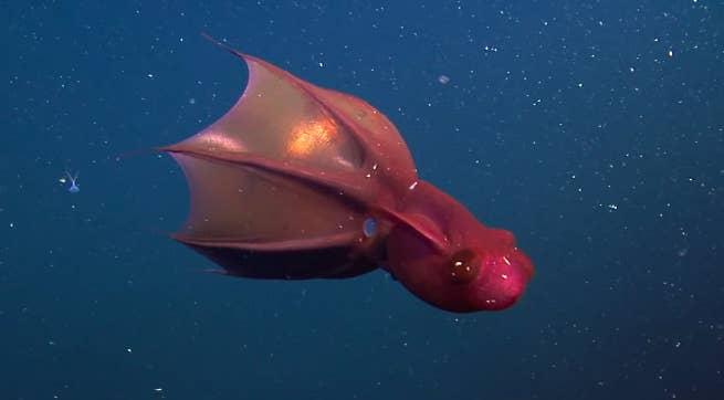 9700 Koleksi Gambar Hewan Di Bawah Laut Terbaik